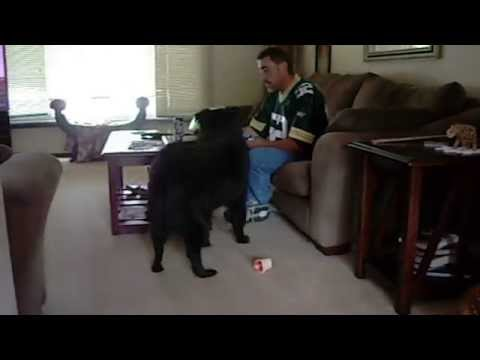 Dog Fetches Owner a Beer during Football