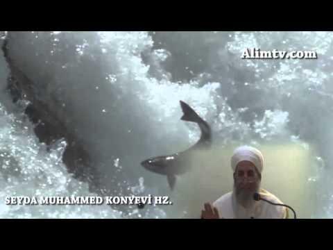 Allah'ın (cc) büyüklüğüne dair bir örnek -  Seyda Muhammed Konyevi Hazretleri
