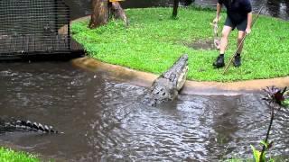 Giant Crocodile at Cairns Zoo 2011, Australia