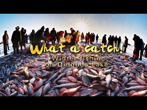 Live: What a catch! Winter fishing on Qinghua Lake体验青花湖冬捕 感受原始渔猎文化