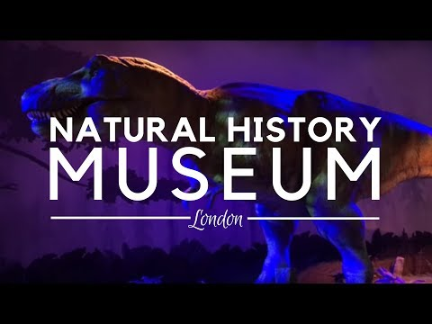Natural History Museum, London - Best Museums in London - Museum of Nature in London, United Kingdom