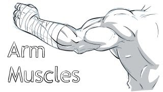 A guide to Arm Muscles/Anatomy