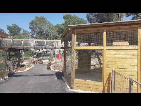 Brown-nosed coati enclosure
