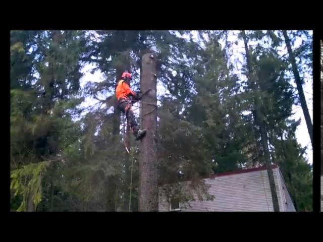 Professionaalne puude langetamine