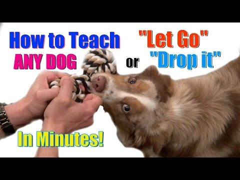 How to Teach ANY DOG 'Drop it' / 'Let Go' in Minutes!