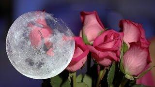 Zitmy Presenta: Hechizo de Amor con la Luna Llena