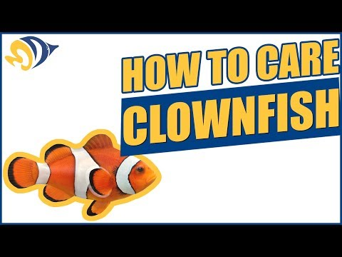 "Finding Dory: How To Care For A Clownfish (""Nemo"") In A Saltwater Aquarium"