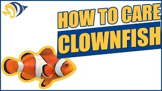 """Finding Dory: How to Care for a Clownfish (""""Nemo"""") in a Saltwater Aquarium"""