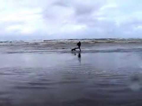 Hektor Ocean Shores 2002