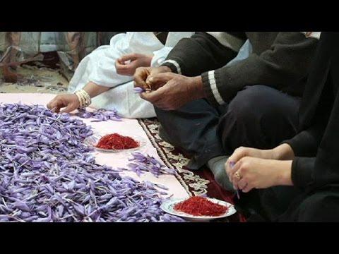 """Шафран - """"красное золото"""" Ирана - economy"""