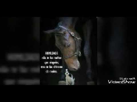 Imagens Lindas De Cavalos Com Frases Youtube