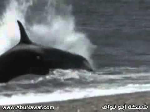 Shark eats a man قرش يأكل رجل - YouTube