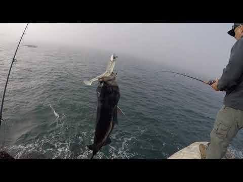 Shore Rockfishing Pt 1