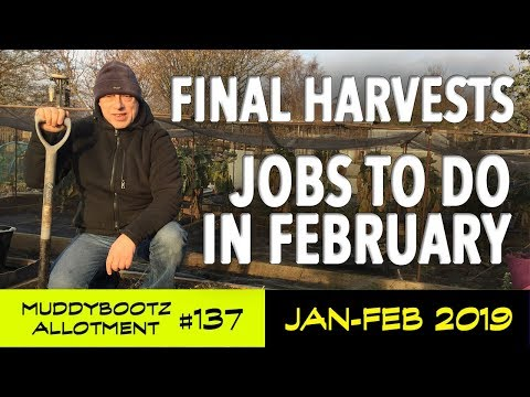 muddybootz-allotment-#137---final-harvests---jobs-for-february---seed-sowings