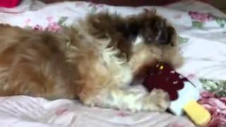 Polo jouet pouet pouet doggybox 2
