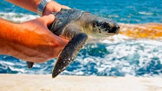 Sea Turtles: The Lost Years - Full Episode