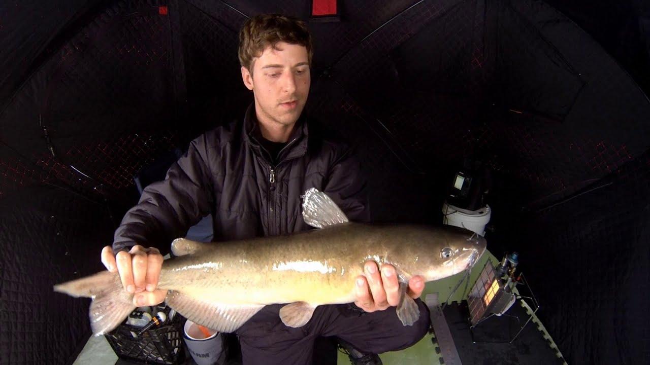 Ice fishing for big catfish 12 23 2012 youtube for Ice fishing for catfish