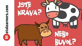 Jste kráva, nebo buvol?