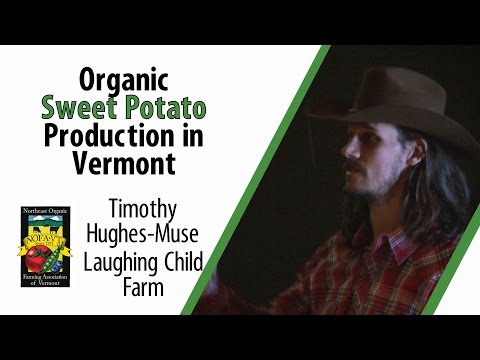 Organic Sweet Potato Production in Vermont