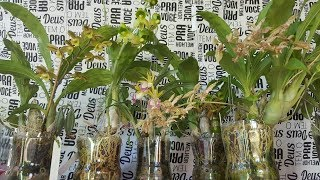 Cultivo na garrafa pet com reservatório de água