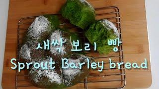 새싹 보리 빵  Sprout Barley bread