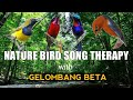 Nature Bird Song Therapy Dengan Gelombang Beta  Mp3 - Mp4 Download
