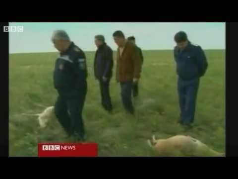 Mystery over mass antelope deaths in Kazakhstan