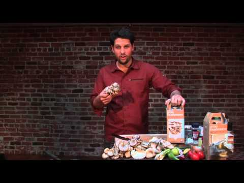 Stroganoff With Cream Of Mushroom Soup & Beef Stew Meat : Mushroom Recipes