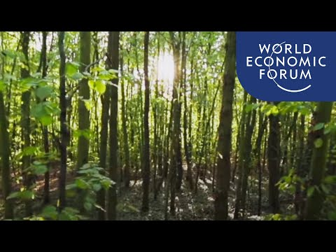 "What is Japanese ""forest bathing"" and how can it improve your health"