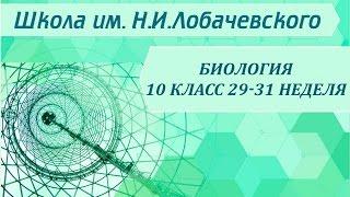 Биология 10 класс 29-31 неделя Законы Менделя