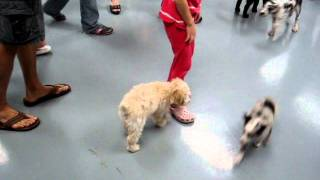 2010-07-14 - Puppy Obedience Class