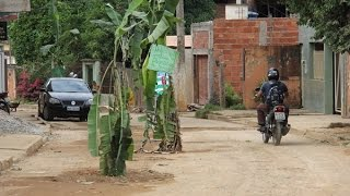Bananeiras no meio da pista no Macuco