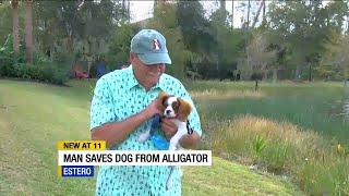 WATCH: Lee County man pulls puppy from alligator's jaws in Estero
