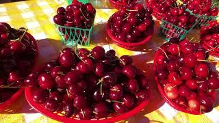Healdsburg Farmers Market