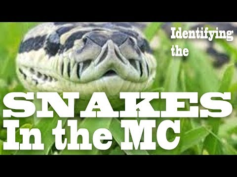 Identifying the Snakes In The Motorcycle Club