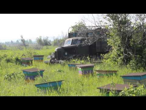 Перевозка пчел на луга. Пасека Старчевских