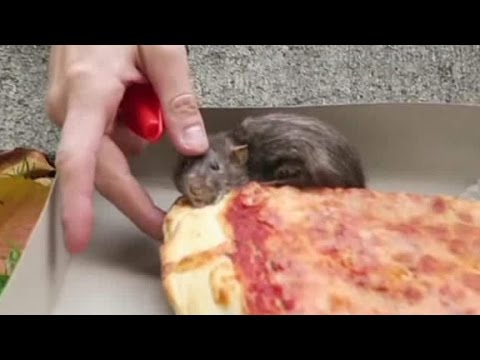 A New Pizza Rat Takes The Streets Of New York