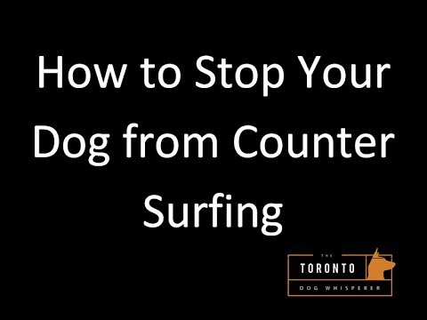 Stop Dog From Counter Surfing