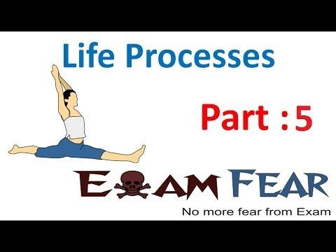 Biology Life Processes part 5 ( Autotrophic & Heterotrophic nutrition) CBSE class 10 X