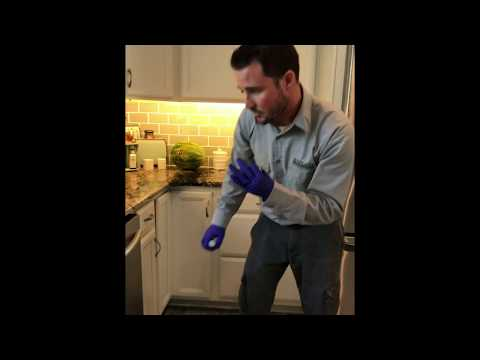How To Get Rid Of CockRoaches In Your Kitchen In Orlando, Florida