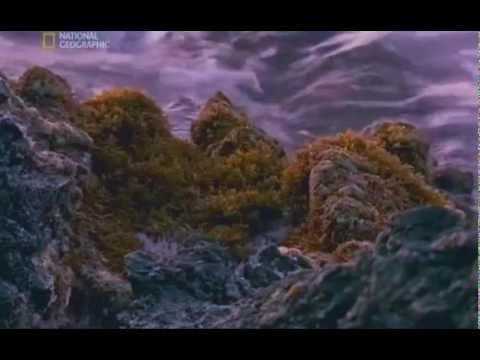 National Geographic - Чиста Наука: Произходът на живота (Част 1) - Познавательные и прикольные видеоролики