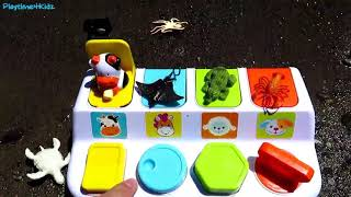 Learning Color Videos For Kids Sea Animal Names Rocky Mountain Wild Forest Lake Toys Babies Children