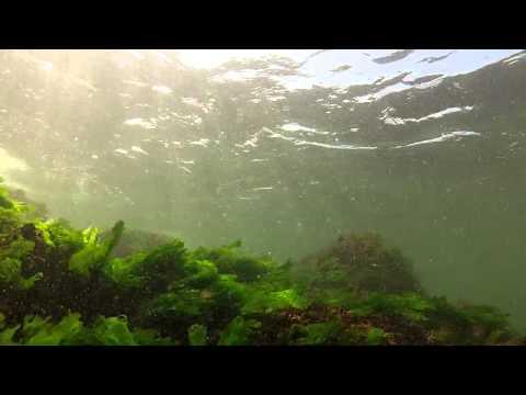 081113 Shallow Water Jetty Swim