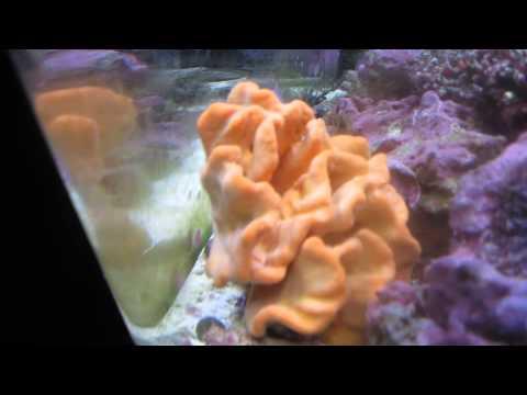 Orange Sponge Salt Water Aquarium