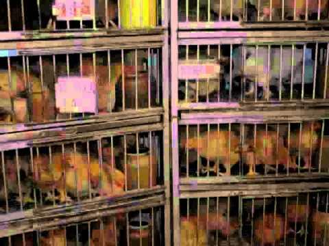 Animal Rights vs  Animal Welfare (EN)