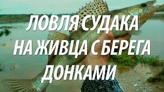 ЛОВЛЯ СУДАКА НА ЖИВЦА С БЕРЕГА С НОРМУНДОМ ГРАБОВСКИСОМ(Ловля судака на живца с берега на донные снасти на рыбалке с Нормундом Грабовскисом. ✓✓✓ Снасти для рыбалк..., 2015-10-09T17:04:44.000Z)