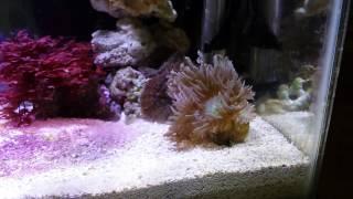 my parents 10g reef tank