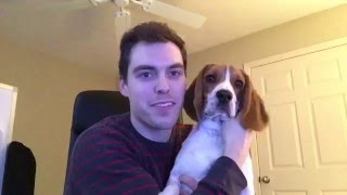 my 28th birthday remy the beagle