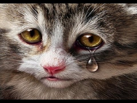 Kisah sedih seekor kucing jalanan