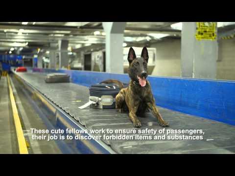 Cutest staff of Tallinn Airport